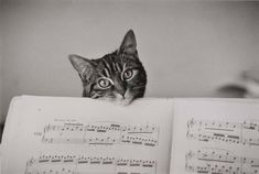 'Noelle the Cat, and Partition', 1982  - photograph by the wonderful Boubat.