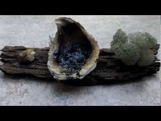 How to make a pine pitch lamp. #bushcraft #survival #wilderness #skills