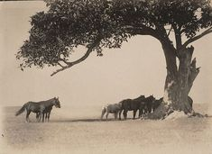 An image of Noonday shade by Harold Cazneaux