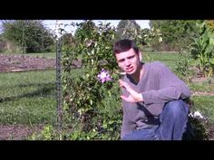 Clematis Care Tips: Step-By-Step Gardening  Spring Hill Nursery