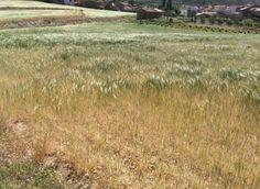 La sequía ha provocado daños por 165 millones en la Comunidad Valenciana, según…