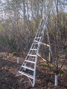 Invested in a 10 foot orchard ladder Feb 2016 and just in time for pruning our fruit and nut trees