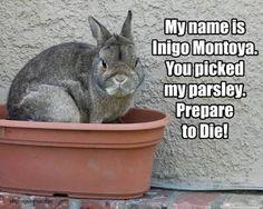 Image result for rabbit moulting meme