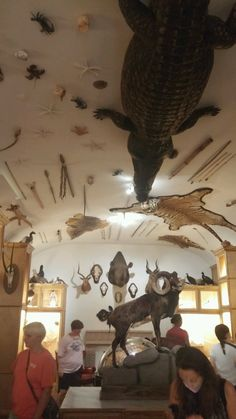 Trophy Rooms, Cabinet Of Curiosities, Taxidermy, Game Room, Hunting, Ceiling Lights, Brown, Home Decor, Decoration Home