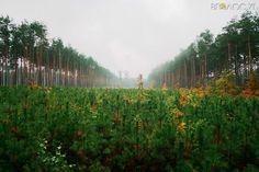 В одному із лісгоспів області на 50% зросла заробітна плата | Вголос.zt