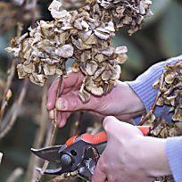 Hortensien richtig schneiden Garden Projects, Garden Tools, Clematis Viticella, Pruning Shears, Kids House, Phalaenopsis, September, Beste Diy, Number 10