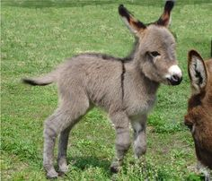 Baby Donkey looking super cute