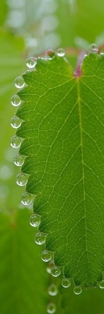 pearl necklace of dewdrops