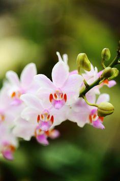 Orchids Visual Aesthetics, Flower Wallpaper, Beautiful Flowers, Bloom, Rose, Secret Gardens, Study Help, Nature, Pictures