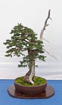 Bonsai Art, Bonsai Garden, Plantas Bonsai, Artists, Metal, Plants, Inspiration, Ideas, Nature