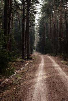 A road through the woods. Forests and dream vacations.   traveling and vistas