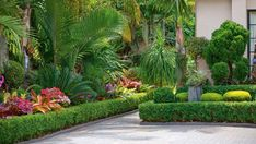 Garden of the week: A dazzling bromeliad-rich oasis - Modern Design Tropical Backyard, Garden Hedges, Landscaping With Rocks, Tropical Garden Design, Bromeliads Landscaping, Landscape Design, Bromeliads, Tropical Landscaping, Garden