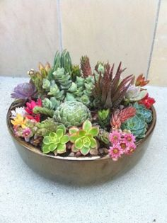 Ideas succulent display center pieces for 2020 Succulent Bowls, Succulent Display, Succulent Gardening, Succulent Arrangements, Succulent Terrarium, Garden Plants, Container Gardening, Terrariums, Succulents In Containers