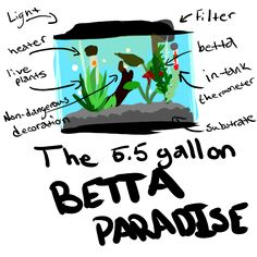 Why do I need a 5.5 gallon?A 5.5 gallon is great for beginners! It's really small and easy to care for, especially if it's filtered. Smaller tanks can't hold a cycle. A cycle is this weird thing aquarists throw around which basically is the process of how waste is disposed of through natural processes in your tank. What's wrong with fish bowls?They're harder to heat and keep clean. Which means your little friend has a higher chance of getting sick! Could I get a ...