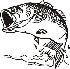 Zander Fisch 00495
