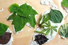 Leaf Casting with Plaster of Paris 22