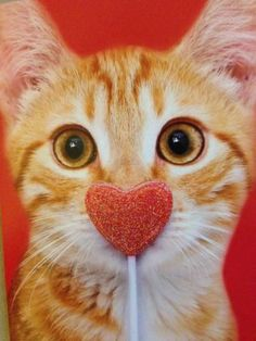 Pet owners know that the greatest way to spend Valentine's Day isn't with Prince Charming—it's with the four-legged friend who loves you unconditionally all year round. Crazy Cat Lady, Crazy Cats, I Love Cats, Cute Cats, Funny Cats, Catch The Cat, Valentines Day Cat, Snoopy, Cat Photography