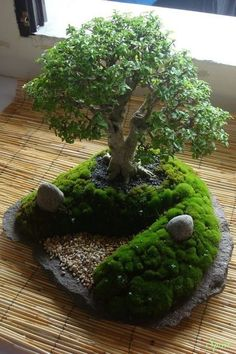 Google+ #bonsai
