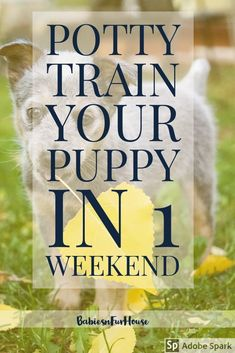 Training your puppy is focused on building your relationship with your pet dog as well as implementing boundaries. Be firm but consistent and you will see extraordinary results in your dog training adventures. Puppy Training Tips, Potty Training, Training Your Dog, Training Collar, Training Classes, Agility Training, Training Academy, Dog Agility, Training Quotes