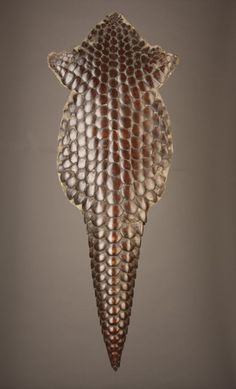 Bony Armoured Skin of An African Giant Pangolin 'Manis Gigantea' | 19th century | Sold  ||| Giant Pangolins live in the forest and savannah of Senegal, Uganda and parts of Angola.