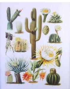 OldWIG Vente & Happening Vintage 24-25-26 AVRIL. 2015 #oldwig #sale #show #happening #vintage #summer #cactus #homedecor #exvoto
