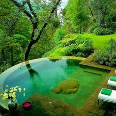 Naturally-filtered swimming pool