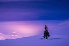 Pink World in Tree - Hokkaido  Biei.  The tree lit up by the light in a moon. The sky was dyed pink.
