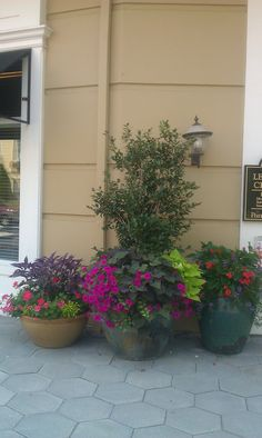 Great container gardening by Kevin Hostetler. Feel free to call Kevin at 770-8338561 for a consultation.