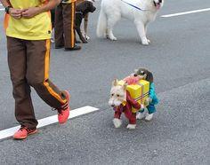 プレゼントを運ぶ犬