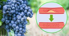 La nueva evidencia obtenida confirma que el potente compuesto antioxidante, resveratrol, podría disminuir la rigidez arterial de forma eficaz. http://articulos.mercola.com/sitios/articulos/archivo/2017/05/29/beneficios-para-la-salud-del-resveratrol.aspx