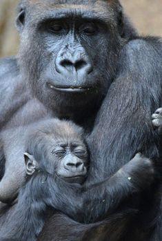 Expressions - priceless ♥ Con esta preciosa imagen de #amor animal os deseamos un estupendo fin de semana!