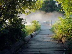 wood bridge walk way