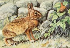 Fuertes, Louis Agassiz (1874-1927) - Burgess Animal Book for Children 1920 (Rabbit). #vintage, #animals, #leporidae