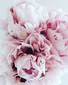 This very pale colour of peony with tinges of purple on the very edge is the favourite, with the dark magenta or purple next, and the very pink last Deco Floral, Arte Floral, Floral Prints, Fresh Flowers, Pink Flowers, Beautiful Flowers, My Flower, Flower Art, Pink Photography