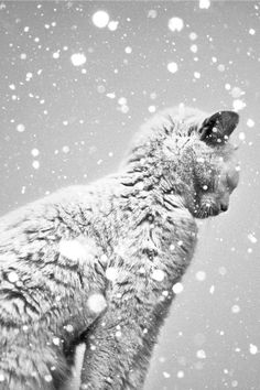 .I see a cat that is suffering outside in the cold and snow. What a shame.......so many homeless cats