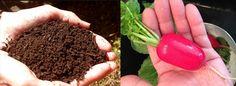 SubTerra Organics | Mother nature knows best!