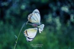Two by Marjolaine Vuarnesson on 500px