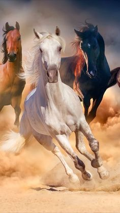 Cute Horses, Pretty Horses, Horse Love, Beautiful Arabian Horses, Most Beautiful Horses, Cavalo Wallpaper, Wild Horses Running, Animals And Pets, Cute Animals