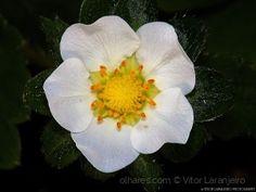 Flores do Meu Jardim.. (Angelical.. )