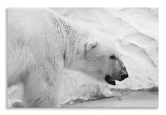 Another new creation ready to hang    http://thousandface.myshopify.com/products/polar-bear-canvas-black-white-animals-landscape-wall-art-picture-home-decor?utm_campaign=social_autopilot&utm_source=pin&utm_medium=pin