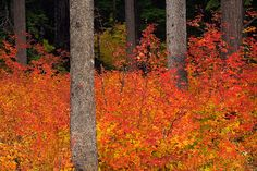 Forest Ablaze by Rick Lundh on 500px