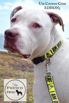 "Deaf Dog Safety with an ""I'm Deaf"" collar, leash and harness set! #Giveaway #sponsored"