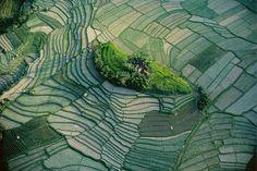 """""""Islote"""" en las terrasas de cultivos de arroz. Bali, Indonesia."""