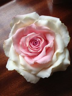 Playing with Sugar Pink / white Rose'