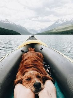Enjoying the view with a friend - Wanderlust Travel