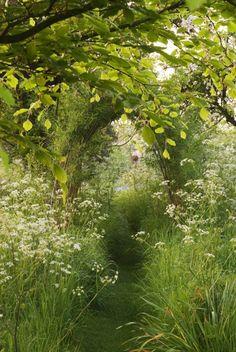 Fairy Path-I would love to walk through this path.♥