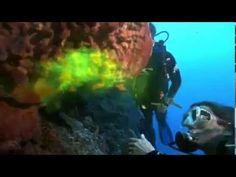 Filter feeding by sponges_ radial