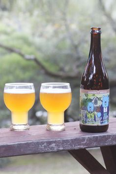 Dry hopped Sour Saison Beer from Sudwerk Brewing. Fall Beers