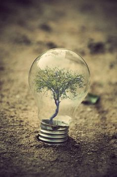Lightbulb with a  tree inside art