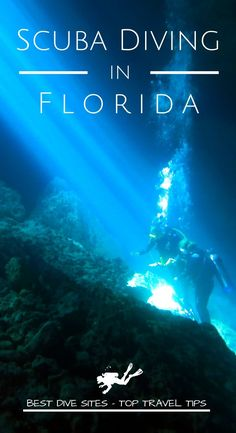 Discover the best dive sites and the top travel tips to go diving in Florida for your next scuba diving trip Snorkelling, Florida Keys, Underwater Photography, Ocean Life, Marine Life, Scuba Diving, Travel Inspiration, Travel Tips, Around The Worlds